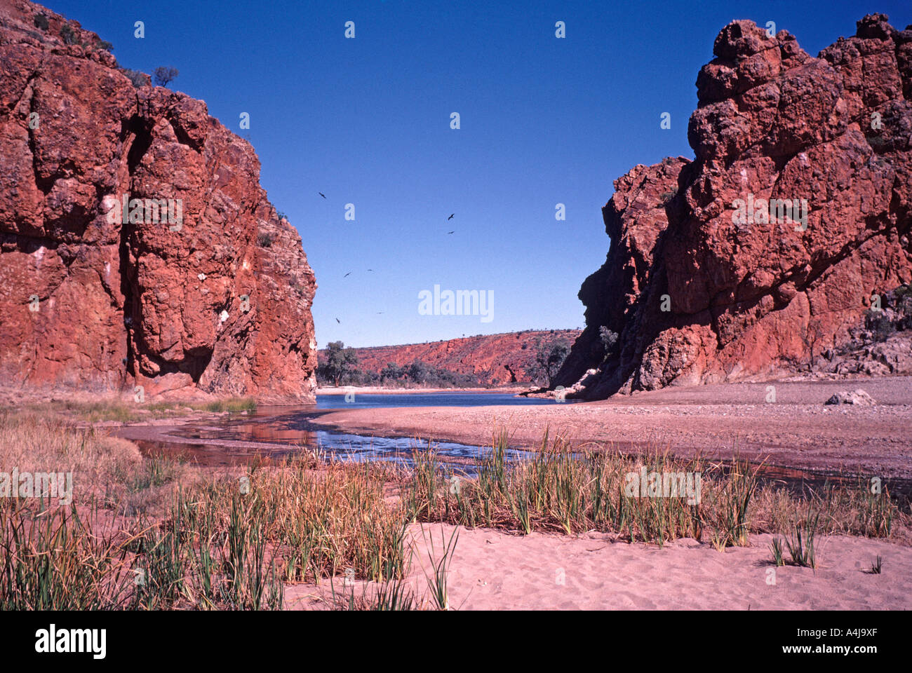 The Finke River in Glen Helen Gorge, West MacDonnell Range National Park, Northern Territory, Australia. - Stock Image