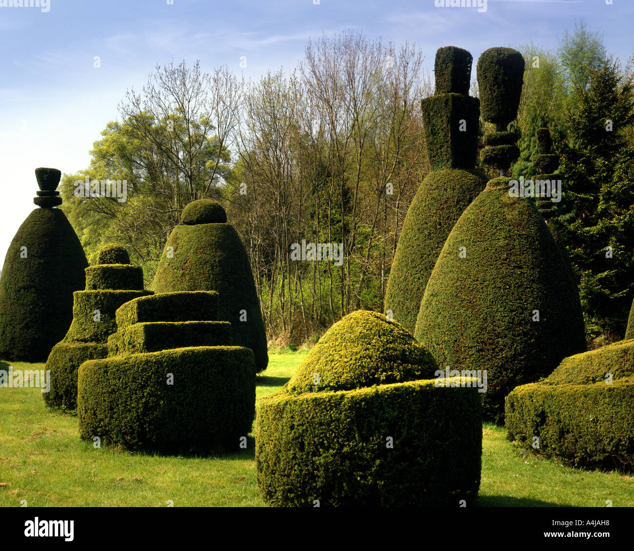 GB - RUTLAND:  Clipsham Yew Tree Avenue - Stock Image