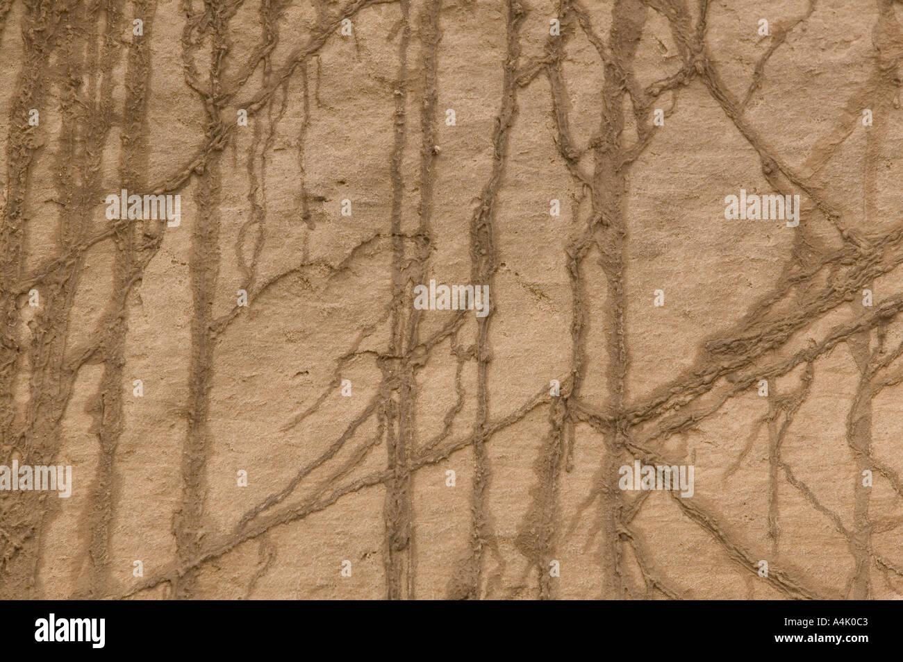 pattersn caused by seepage on coastal cliffs at cromer Norfolk - Stock Image