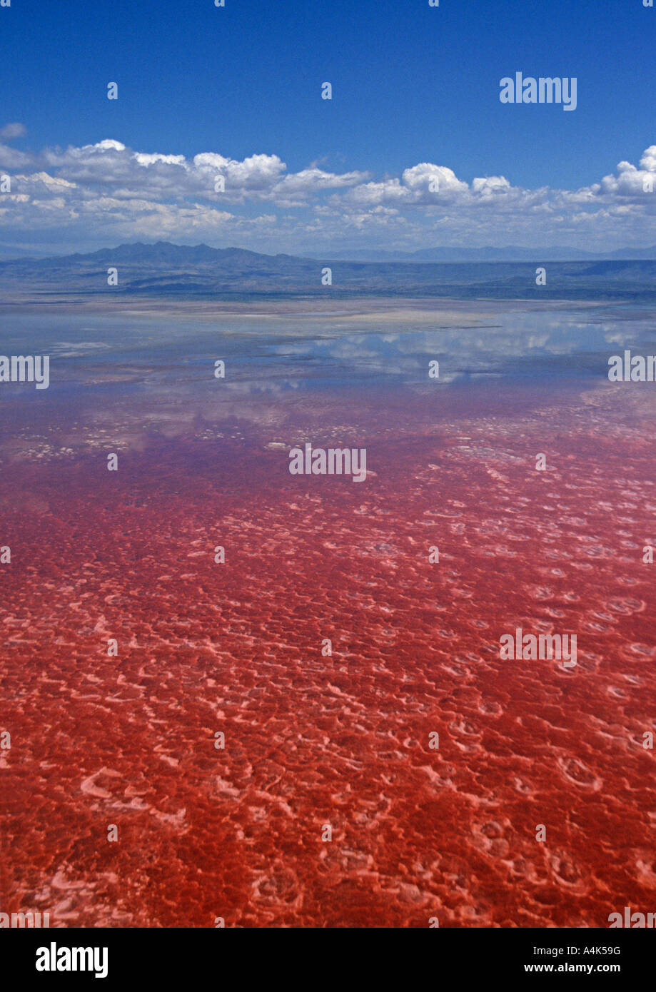 Lake Natron, Tanzania, the red pigment in the cyanobacteria produce the deep reds of the open water - Stock Image