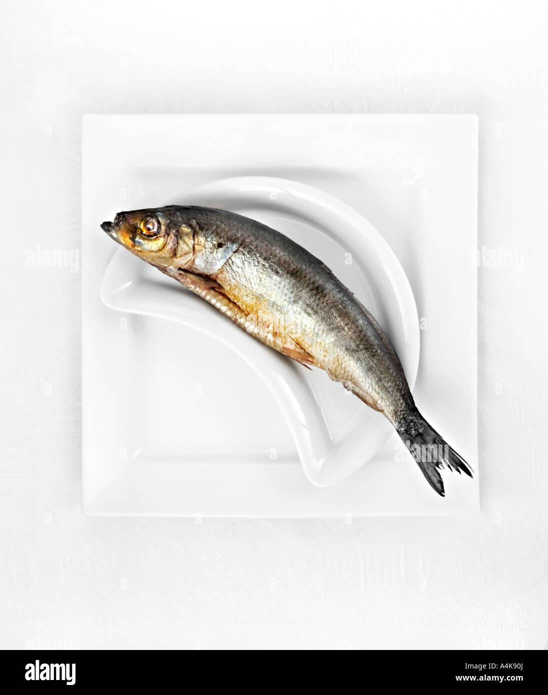 Kipper on white plate - Stock Image