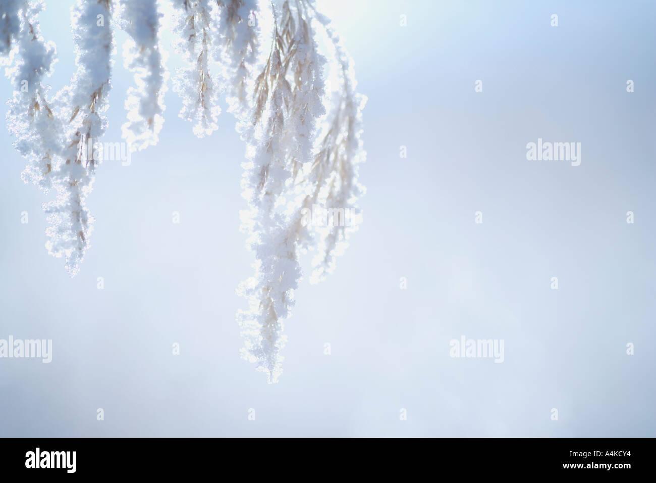 Closeup of hoarfrost - Stock Image
