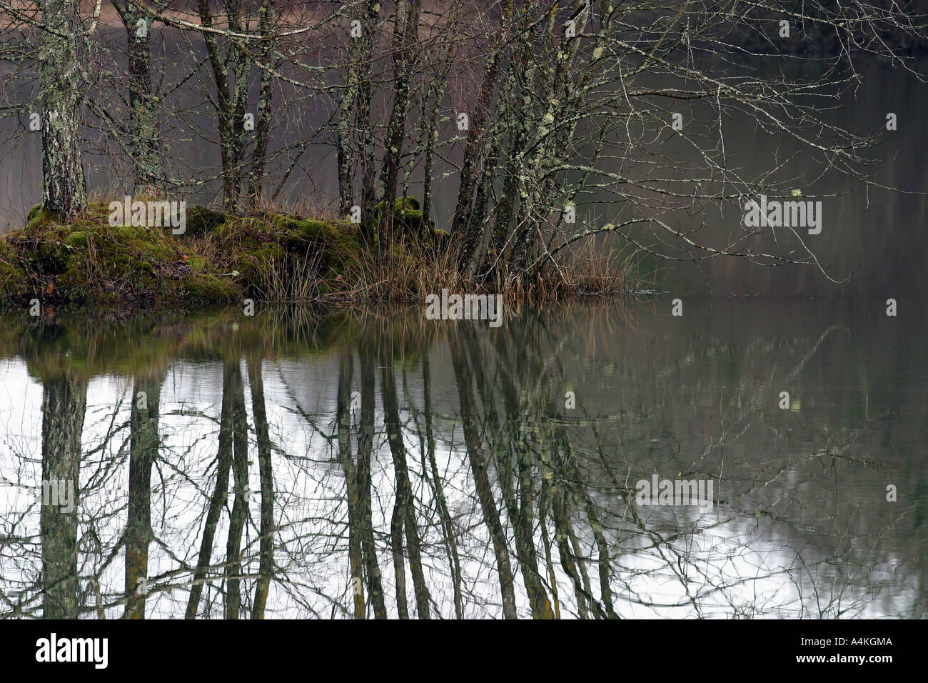 France, Jura, trees and pond in winter - Stock Image