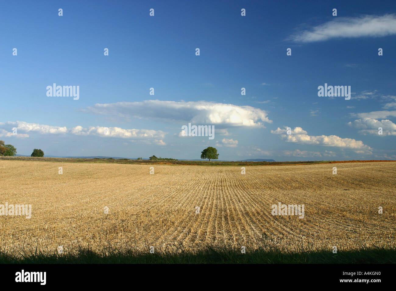 France, Jura, wheatfield - Stock Image