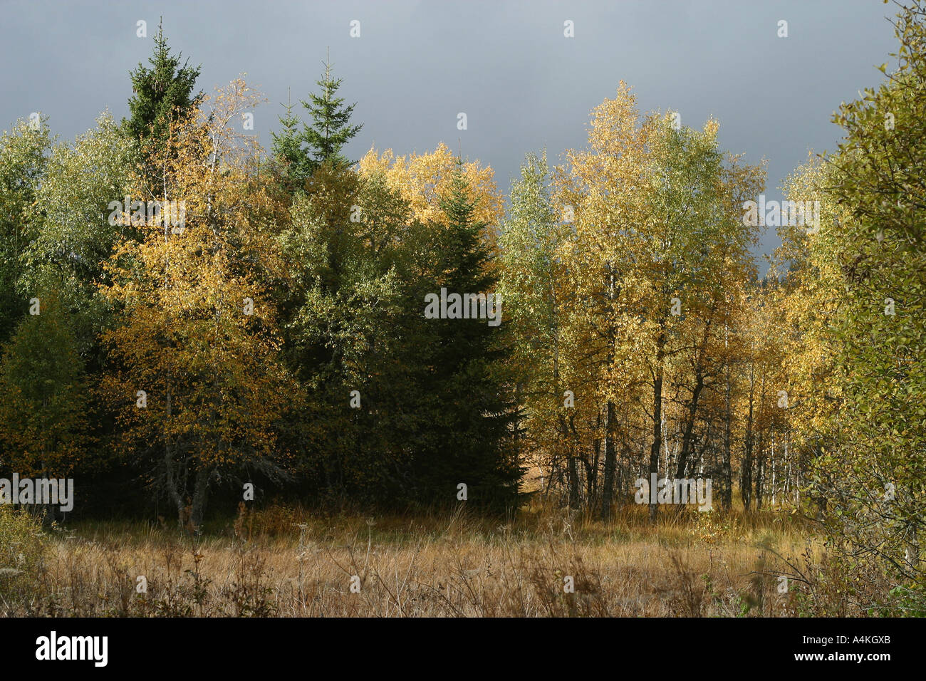 France, Jura, woods in autumn - Stock Image