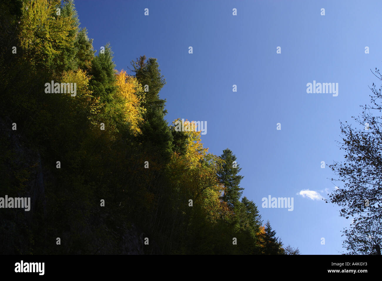 France, Jura, trees on mountain side in autumn - Stock Image