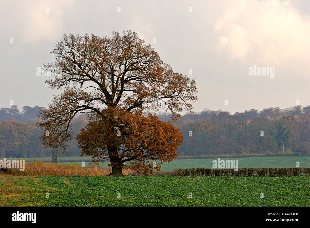 Chiltern Landscape 1 near Great Missenden England UK - Stock Image
