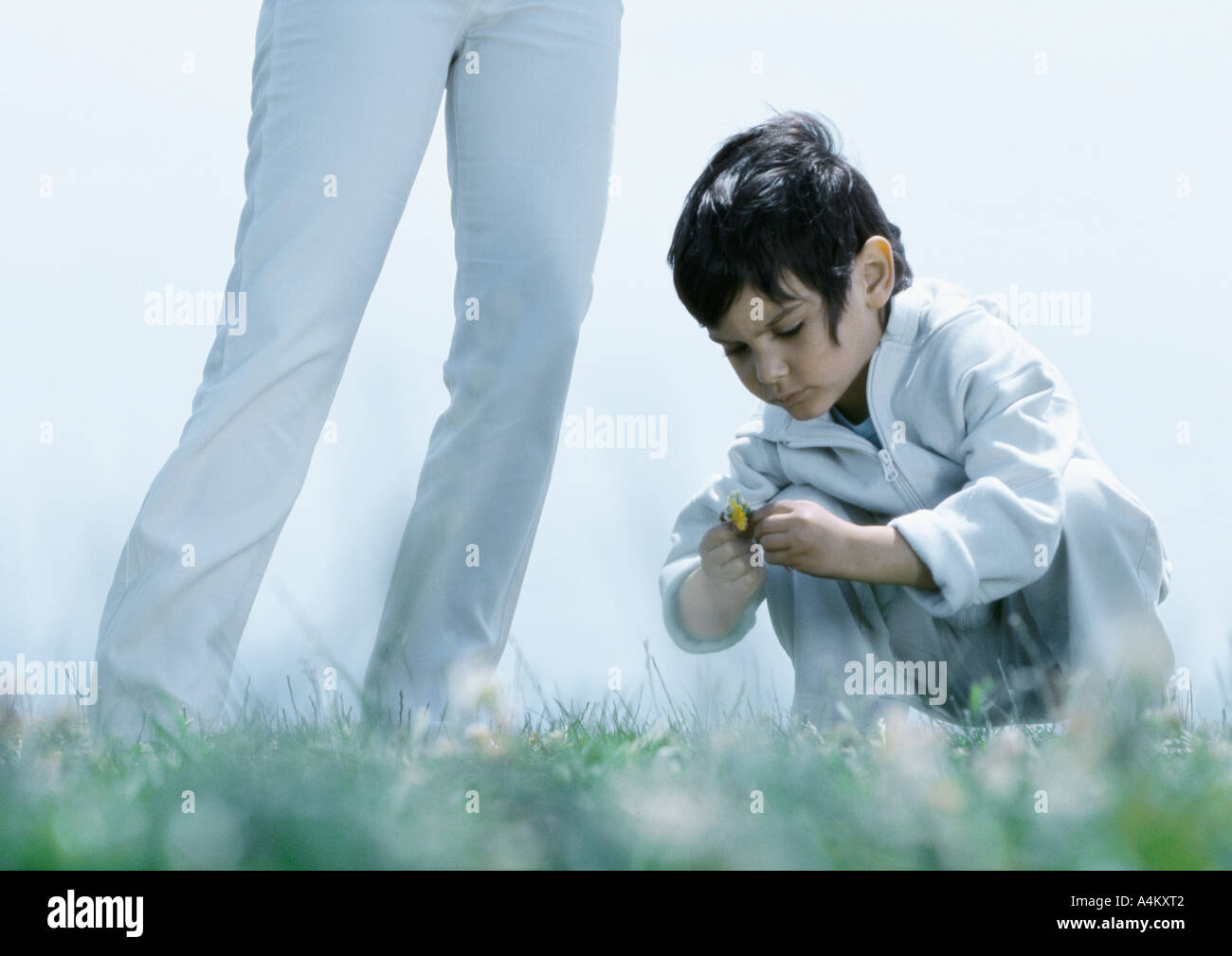 Little boy squatting down on grass looking at flower, next to woman's legs - Stock Image