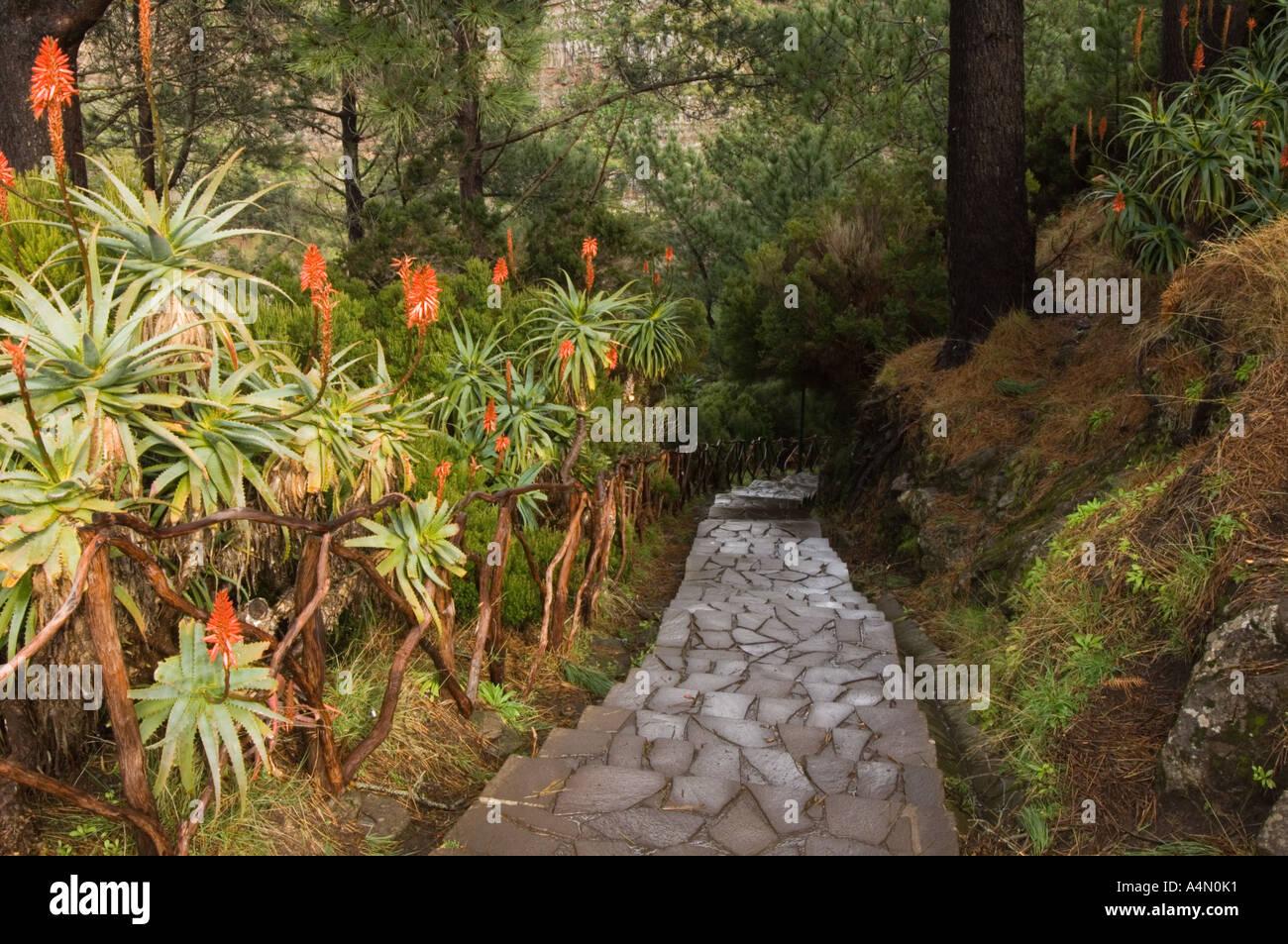 Walkway to miradouro at Eira do Serrado, Madeira, Portugal, Europe - Stock Image