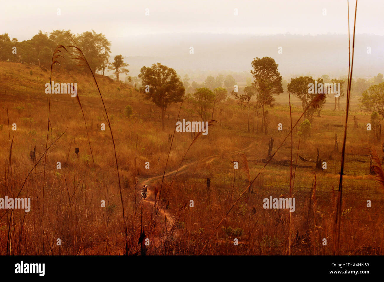 The remote Veal veng Valley at dawn deep in Cambodia s inaccessible Cardamon Forest Asia s last virgin forest due to KR contr - Stock Image