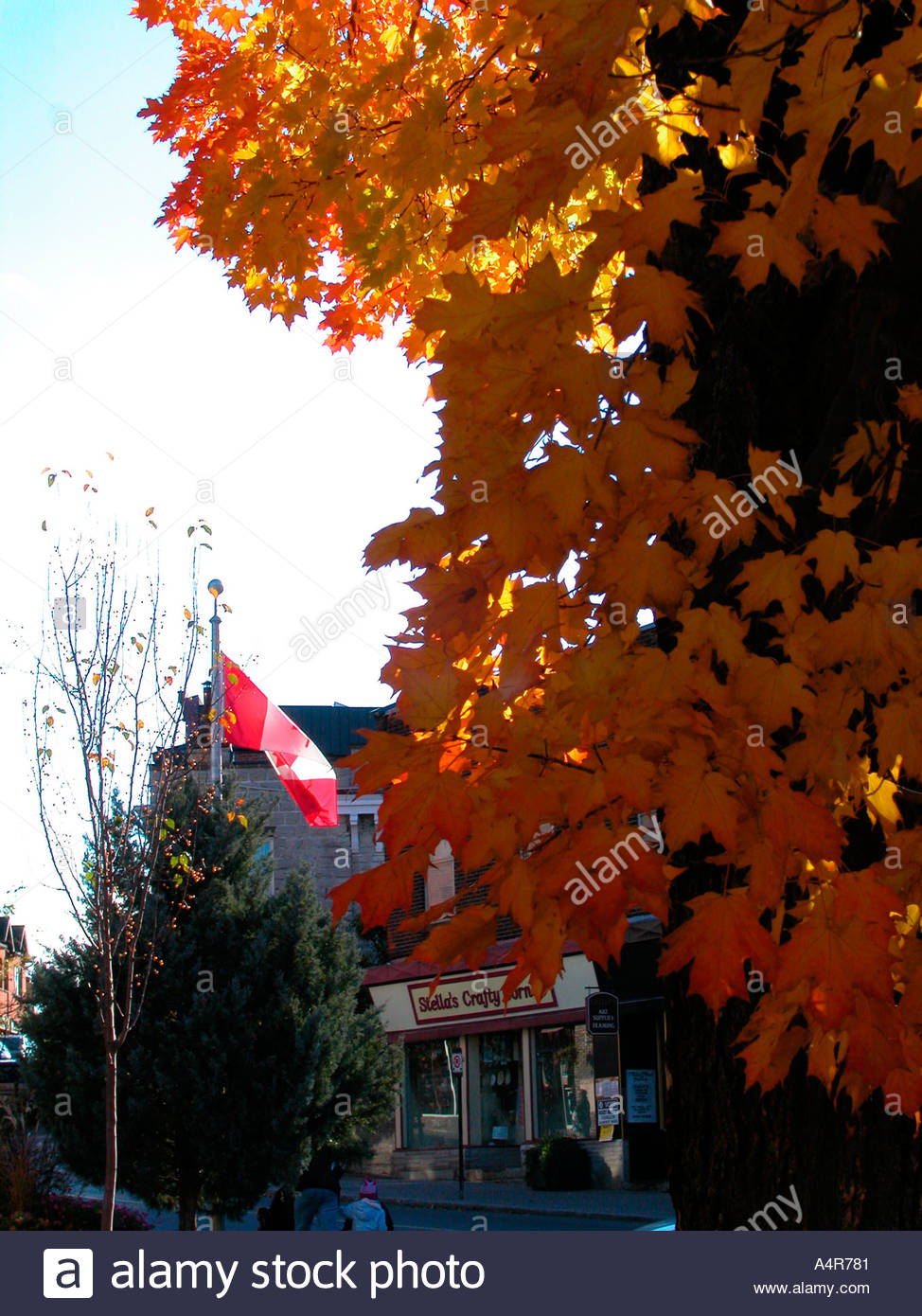 Canadian Flag With Maple Tree In Fall Foliage Colours Stock Photo Alamy