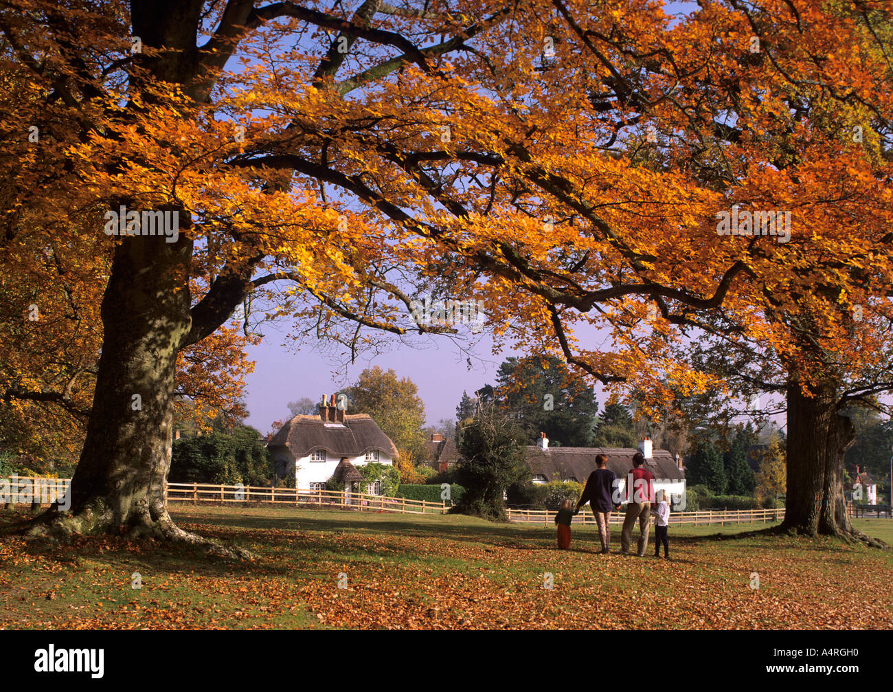 Emery down , Lyndhurst ,New Forest,Hampshire, England showing family under Autunm Trees. - Stock Image