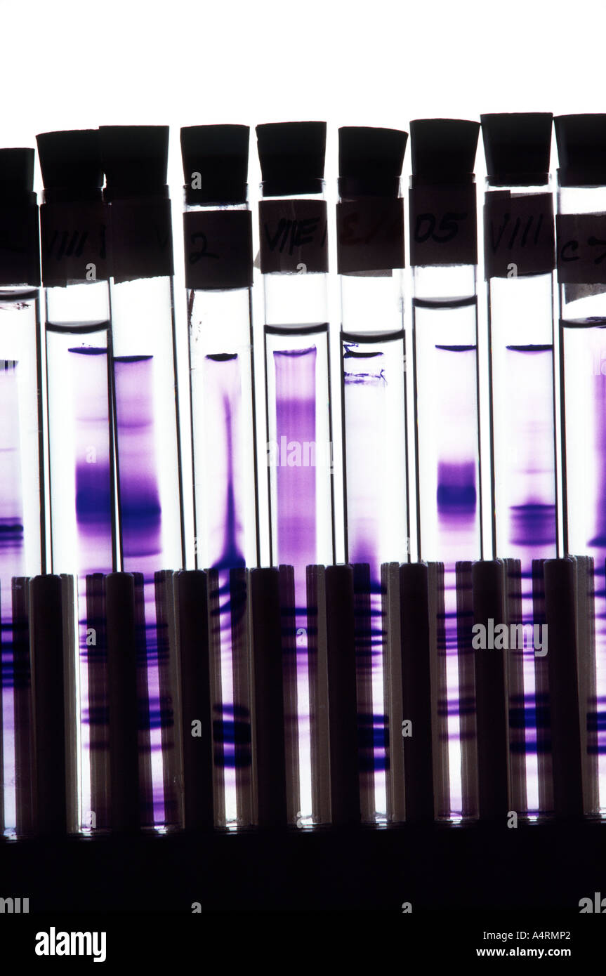 A graphic closeup of test tubes in a research bio lab Stock Photo