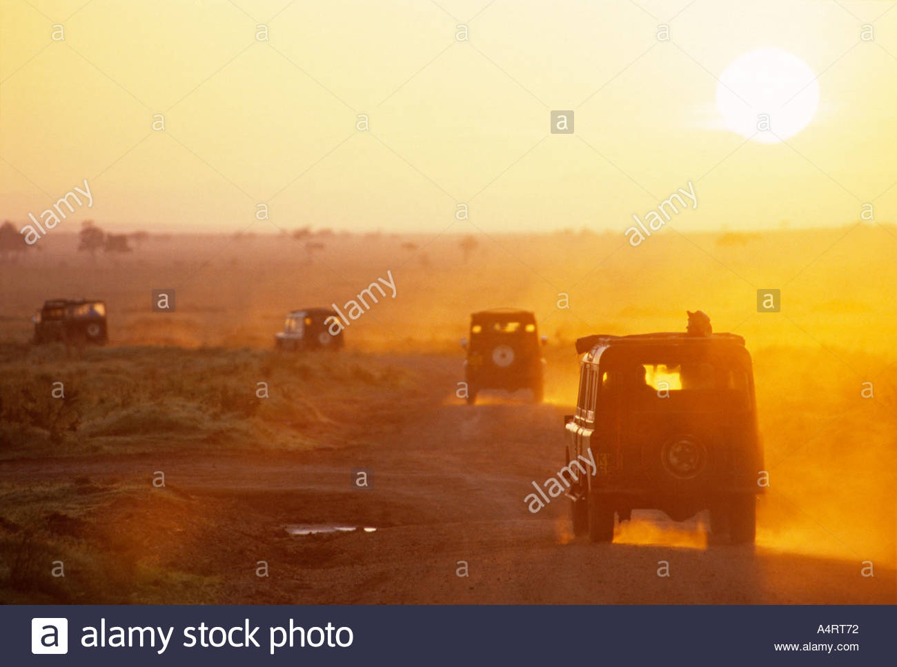 Jeeps departing for early morning game drive from Governors Camp Maasai Mara National Reserve Kenya Africa - Stock Image