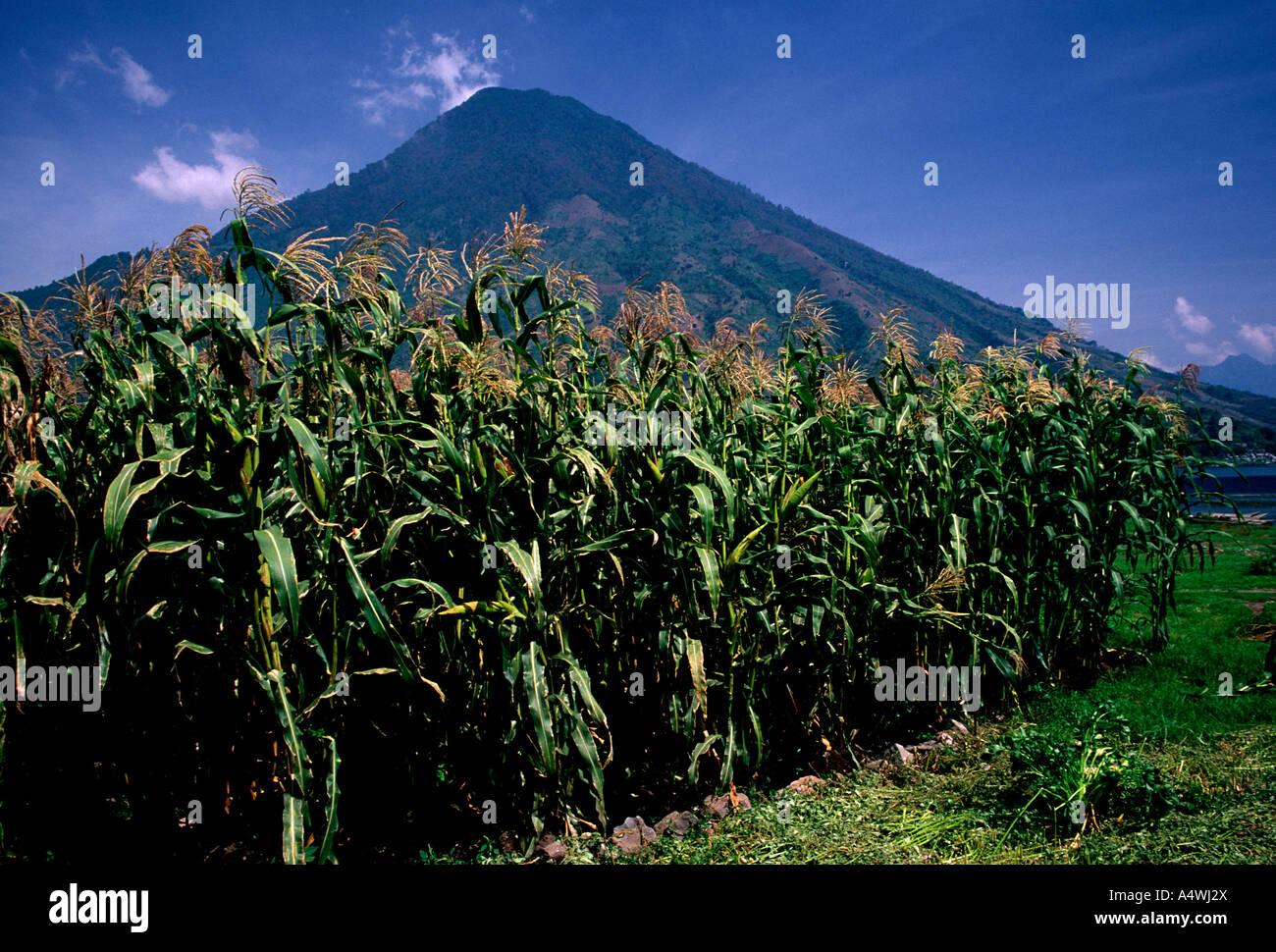 corn crop, stratovolcano, dormant volcano, San Pedro Volcano, Santiago Atitlan, Tzutujil Maya, Solola Department, - Stock Image