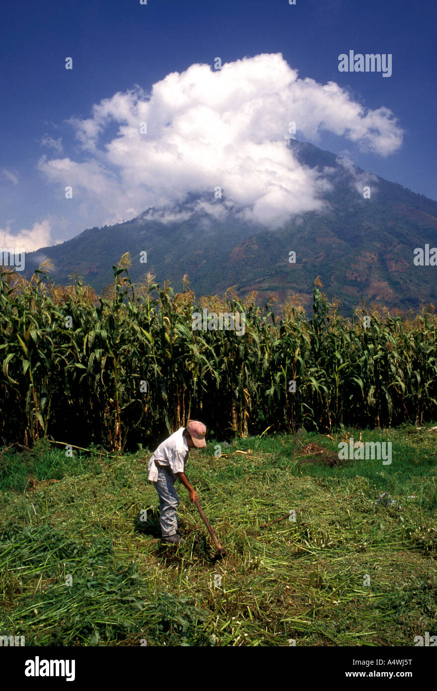 Guatemalan boy,Guatemalan, boy, child, clearing field, corn crop, Santiago Atitlan, Tzutujil Maya, Solola Department, - Stock Image