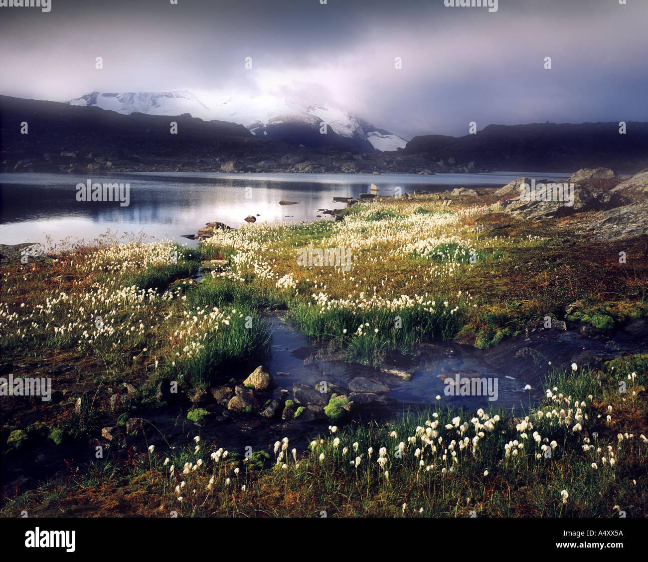 FI - NORTHERN LAPLAND: Moorlands near Kiruna - Stock Image