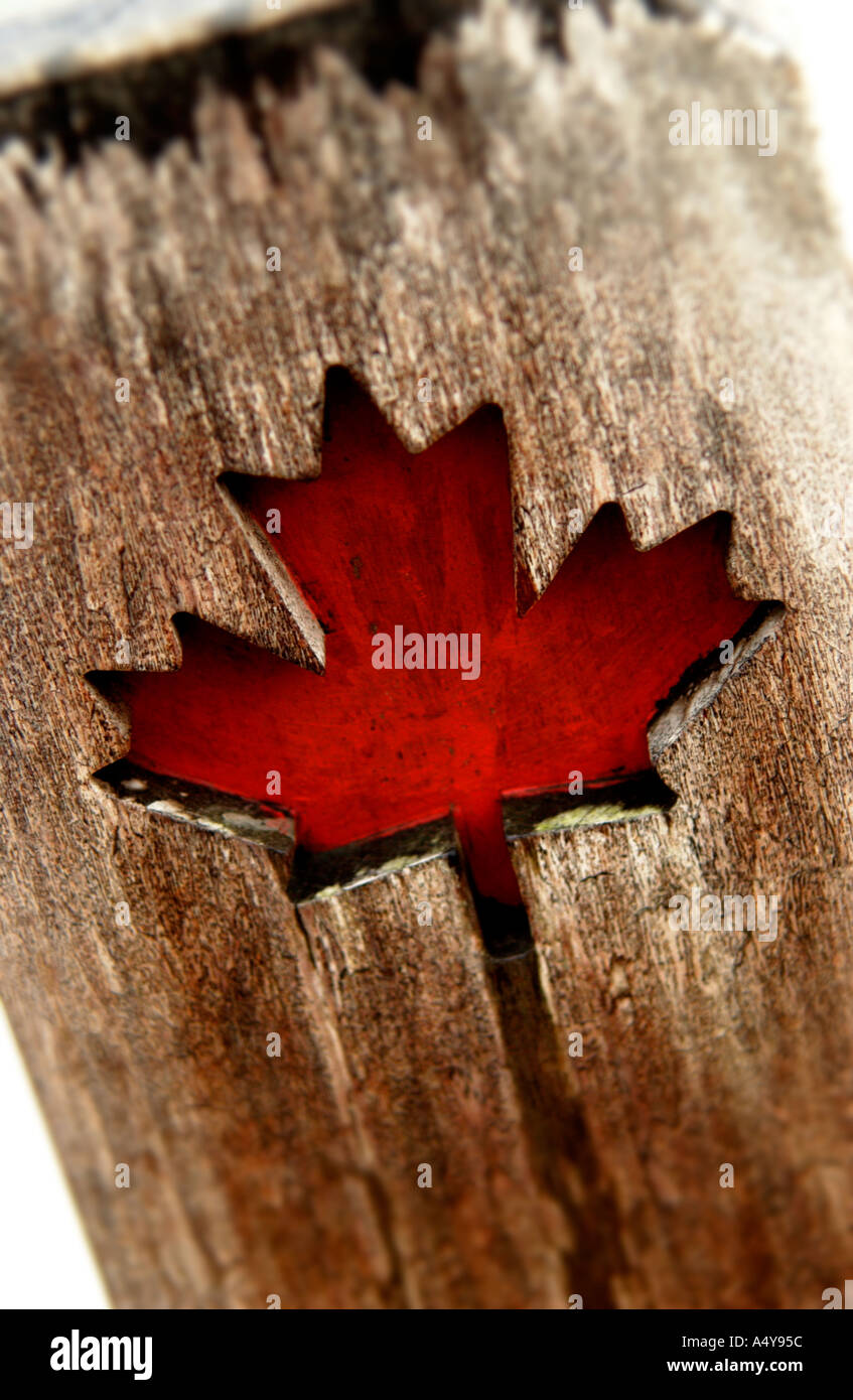 Wood maple leaf carving stock photos wood maple leaf carving