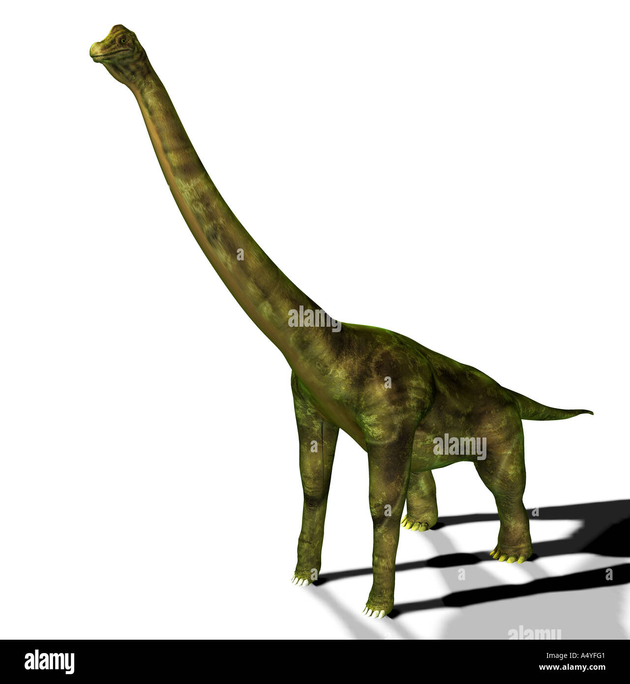 The brachiosaurus seemed also to arm lizard mentioned in the jurassic, had a weight of approx. 80 tons, a lengthStock Photo