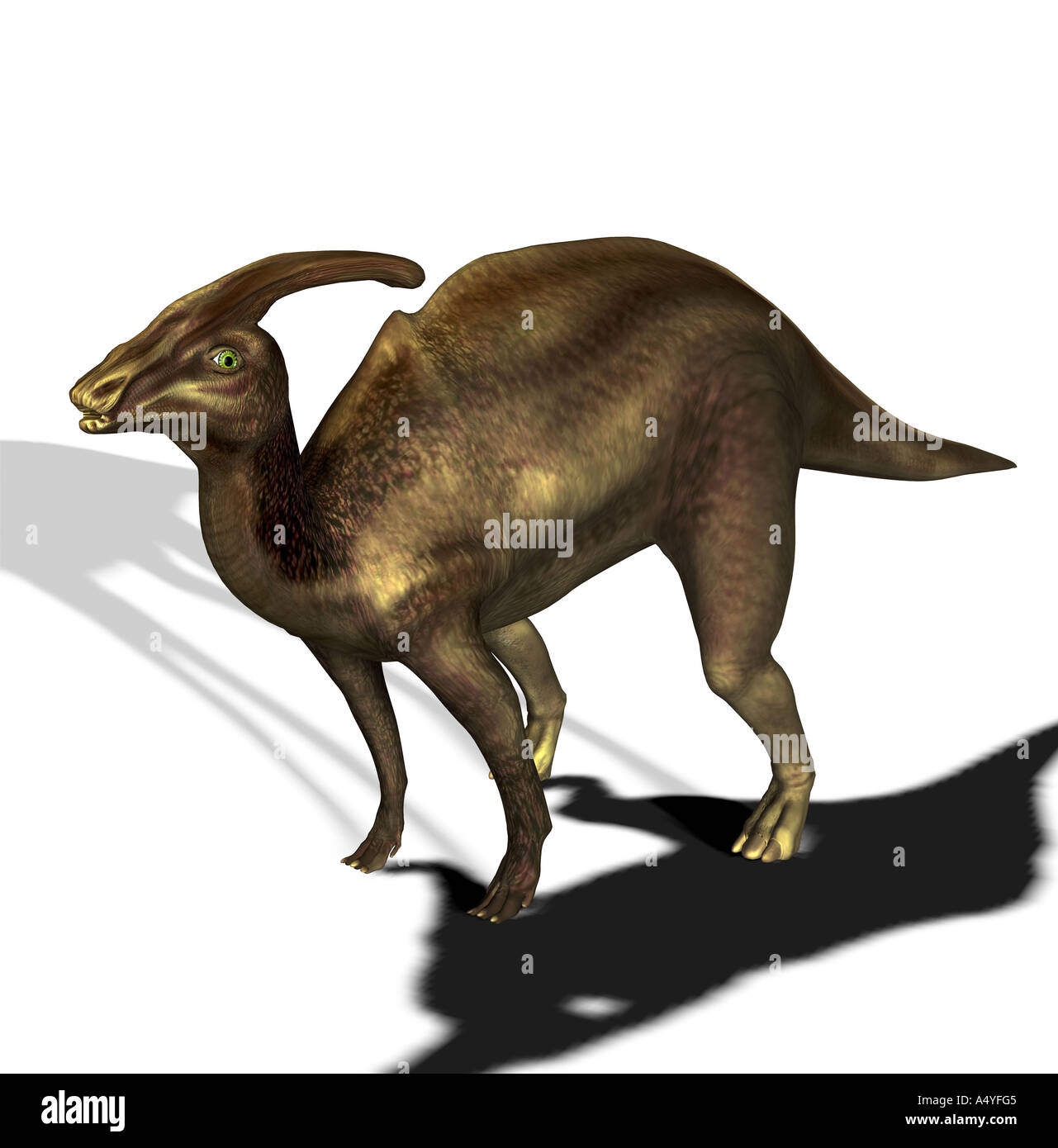 The Parasaurolophus seemed a beside to Saurolophus and in the Cretaceous period. The size amounted to approx. 10m. Stock Photo