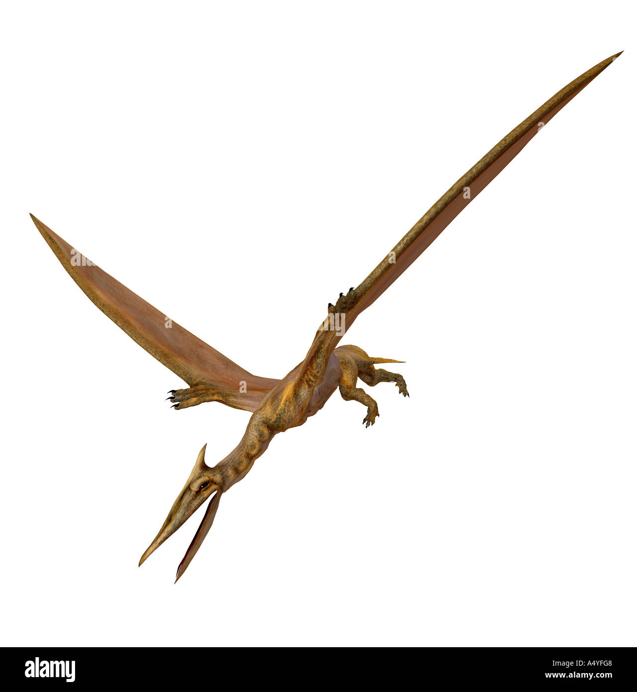 The Quetzalcoatlus northropi was a flight dinosaur with approx. 12 m span and lived in the time of the Cretaceous period . The - Stock Image