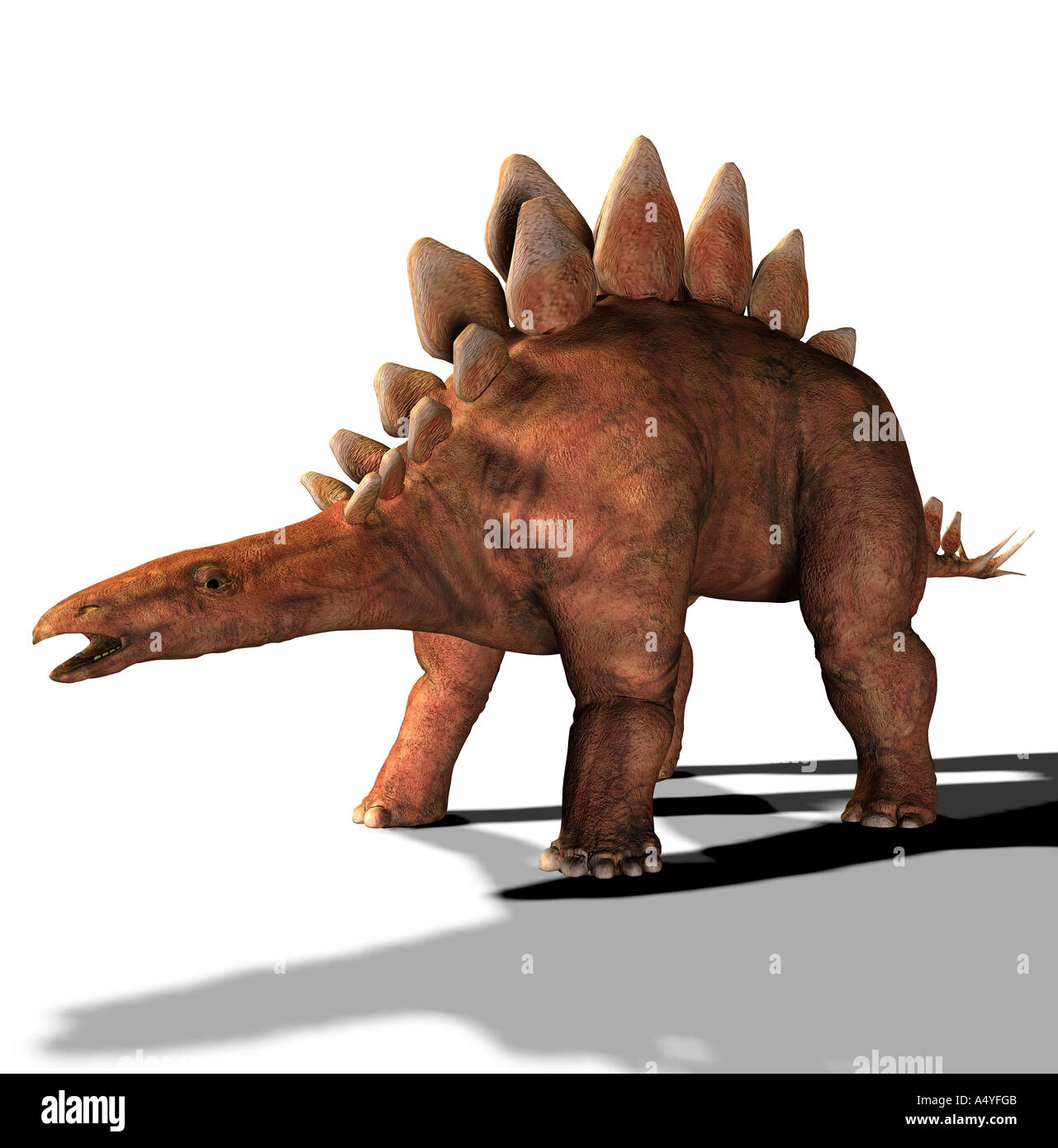 The Stegosaurus is called also plate lizard and in the jurassic period occurred. Its length amounted to approx.Stock Photo