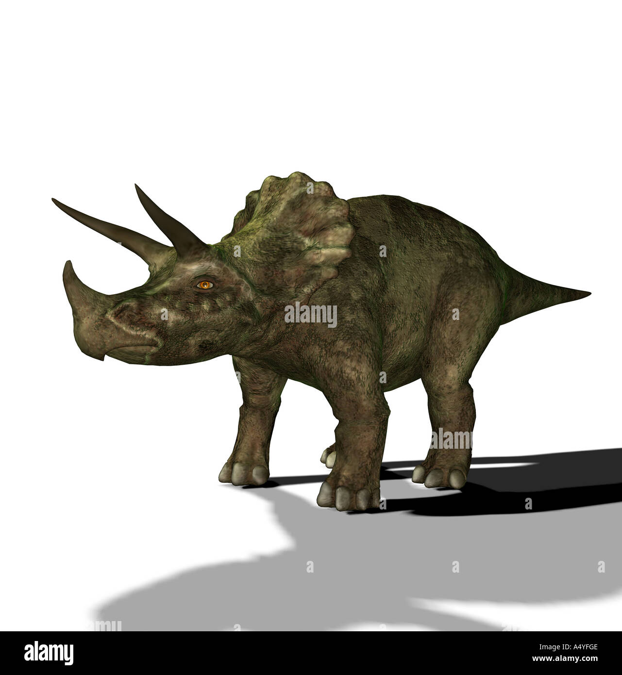 The Triceratops is called three-horn and about 9 m long and in the Cretaceous period occurred. The Triceratops is Stock Photo