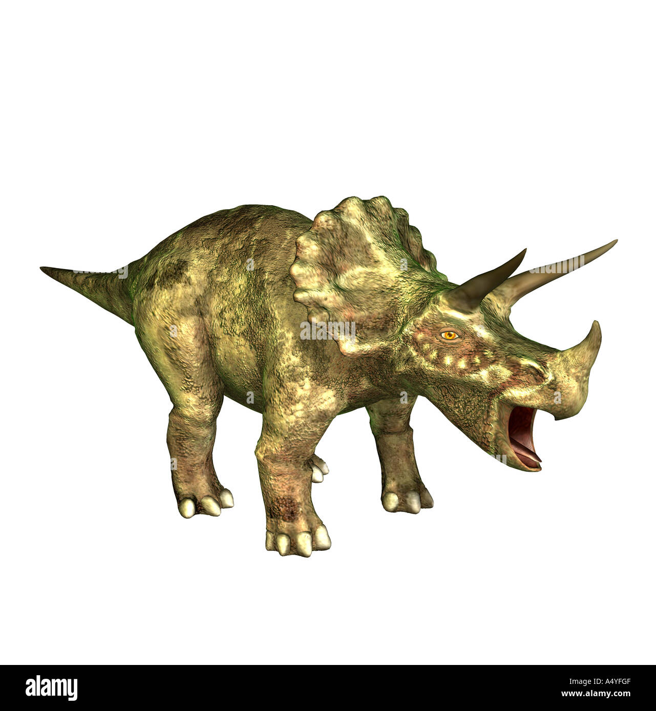 The Triceratops is called three-horn and about 9 m long and in the Cretaceous period occurred. The Triceratops isStock Photo