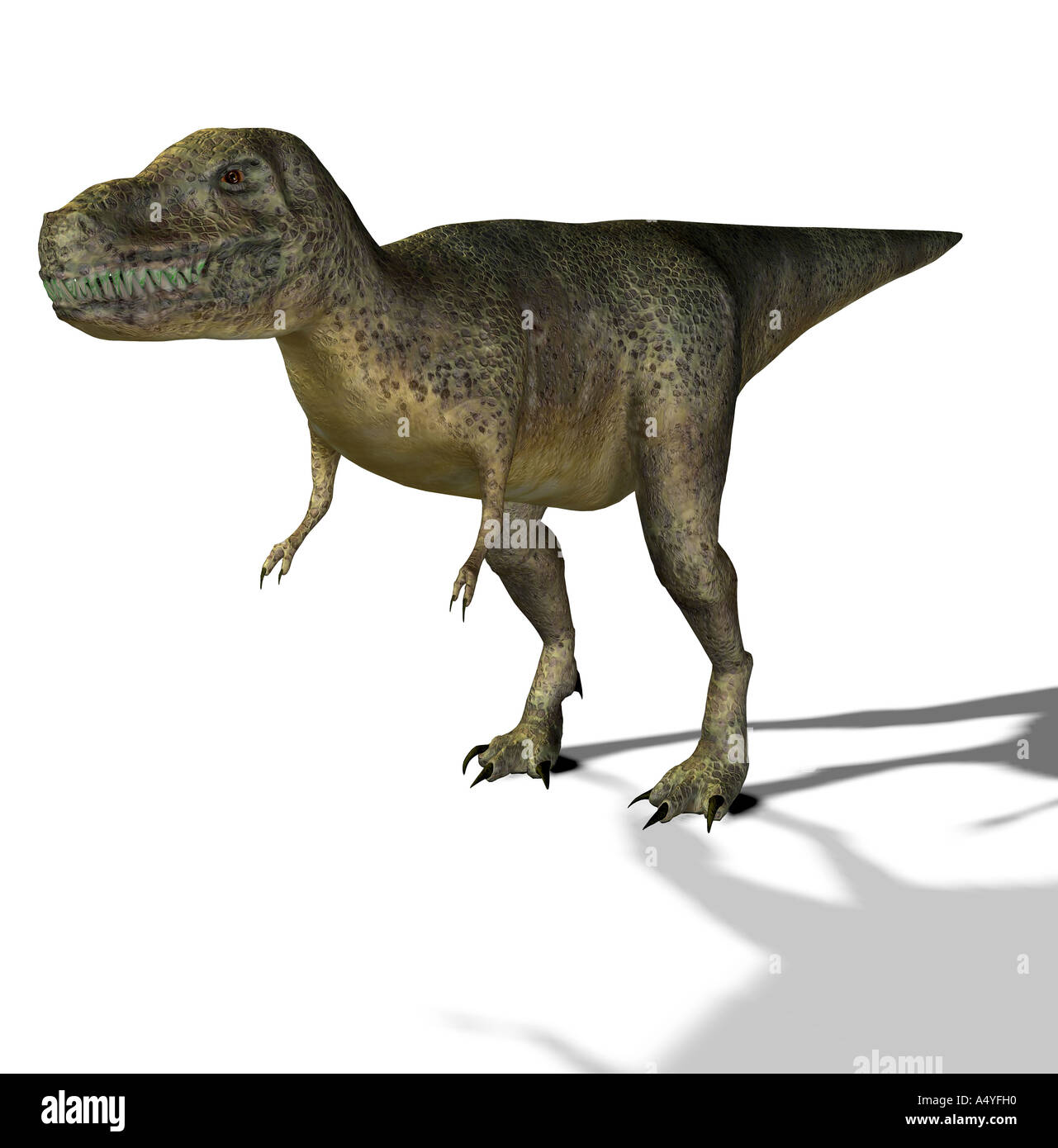 The Tyrannosaurus rex has its name of king of the Tyrannenechsen, in the Cretaceous period lived and a height ofStock Photo