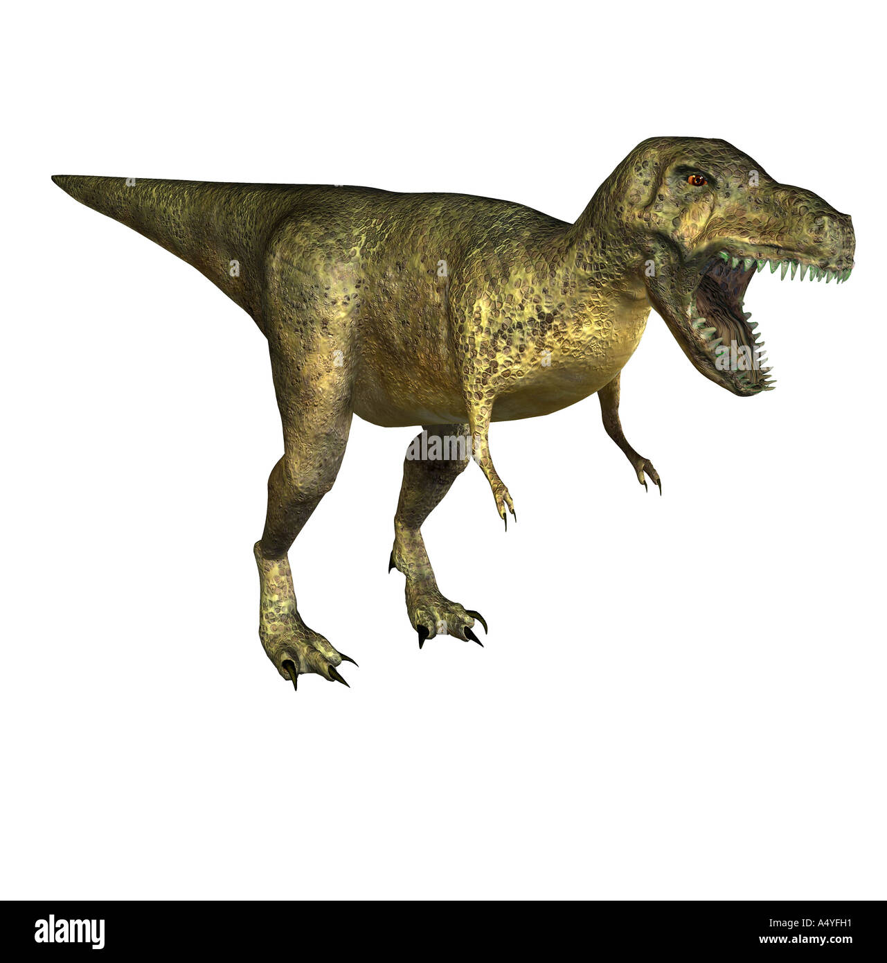 The Tyrannosaurus rex has its name of king of the Tyrannenechsen, in the Cretaceous period lived and a height of Stock Photo