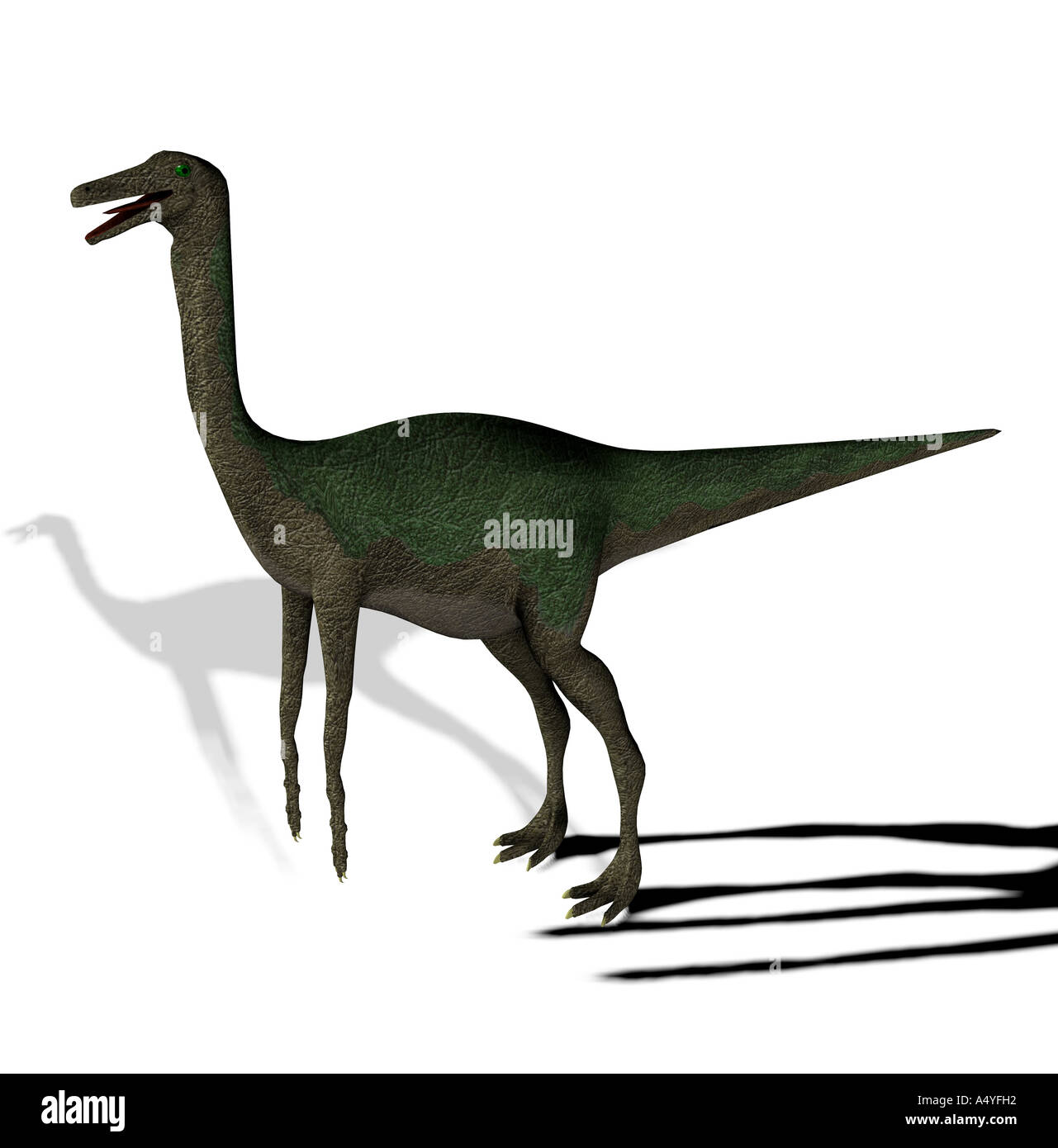 The Gallimimus seemed also chickens to imitators mentioned with a length from more than 6 meters it in the Cretaceous period - Stock Image