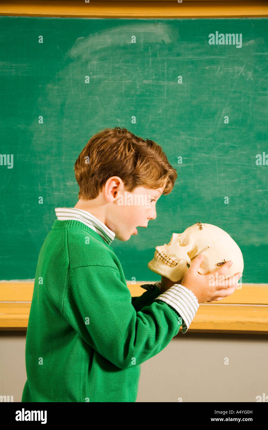 Boy looking at skull in classroom - Stock Image