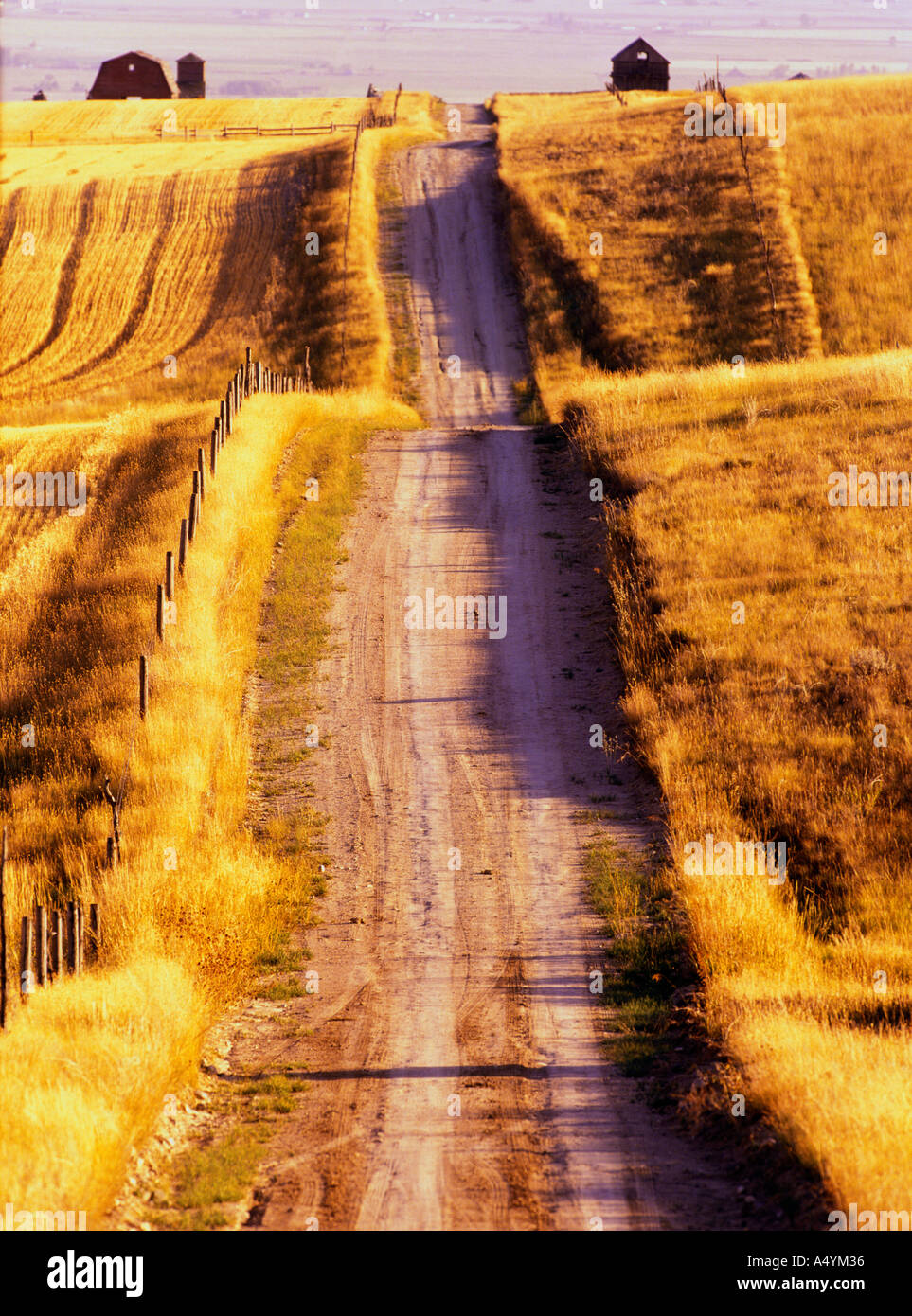 Rutted dirt road through harvested wheat stubble fields in late summer in the Gallatin Valley Montana USA - Stock Image