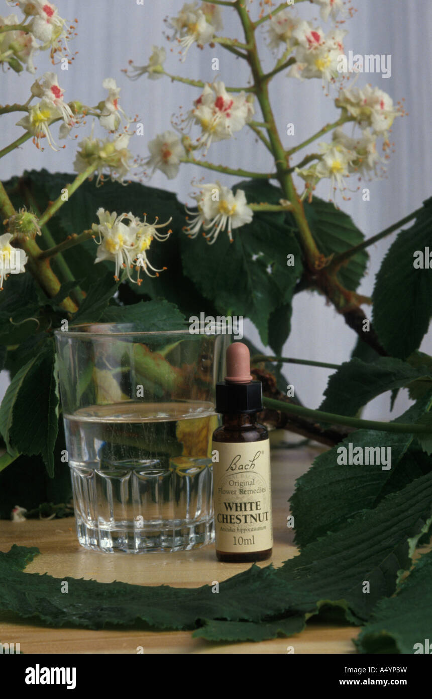 Enchanting White Chestnut Bach Flower Remedy Pictures Images For