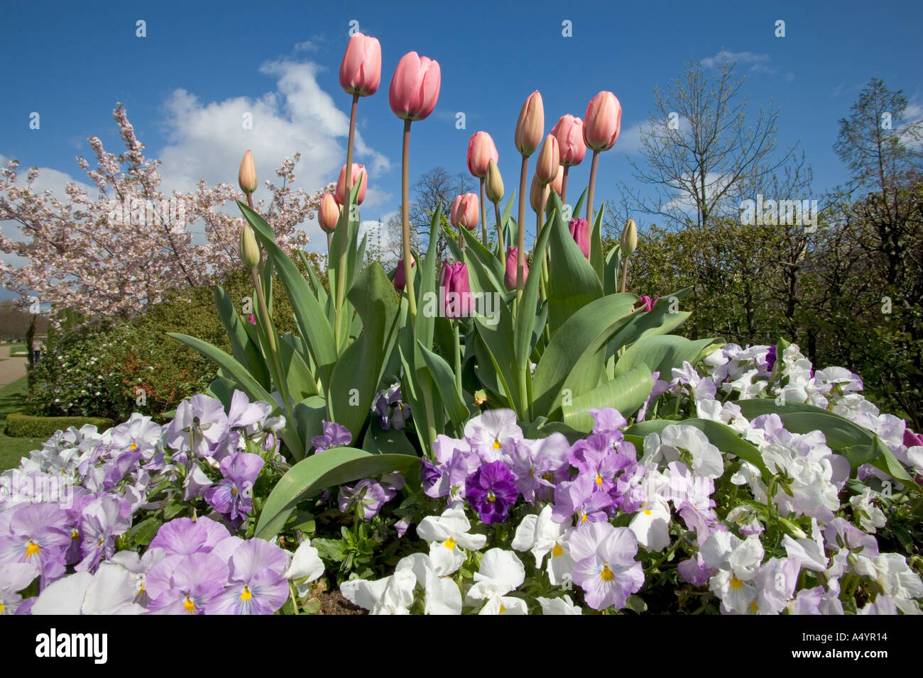 Spring flowers in regents park london uk april stock photo 3640083 spring flowers in regents park london uk april mightylinksfo