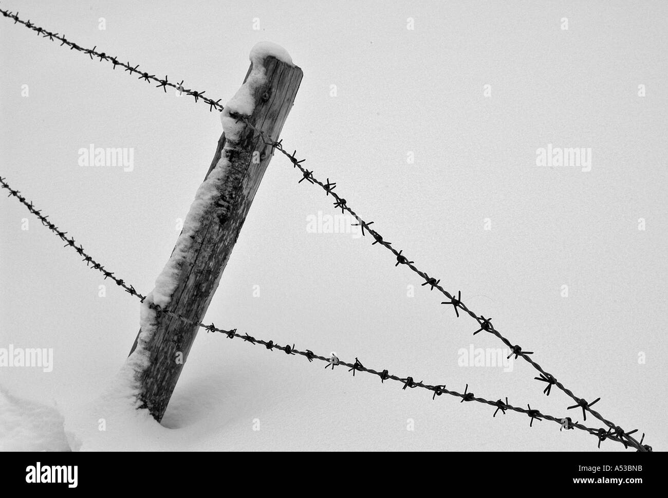 Barbed Wire Fence Black and White Stock Photos & Images - Alamy