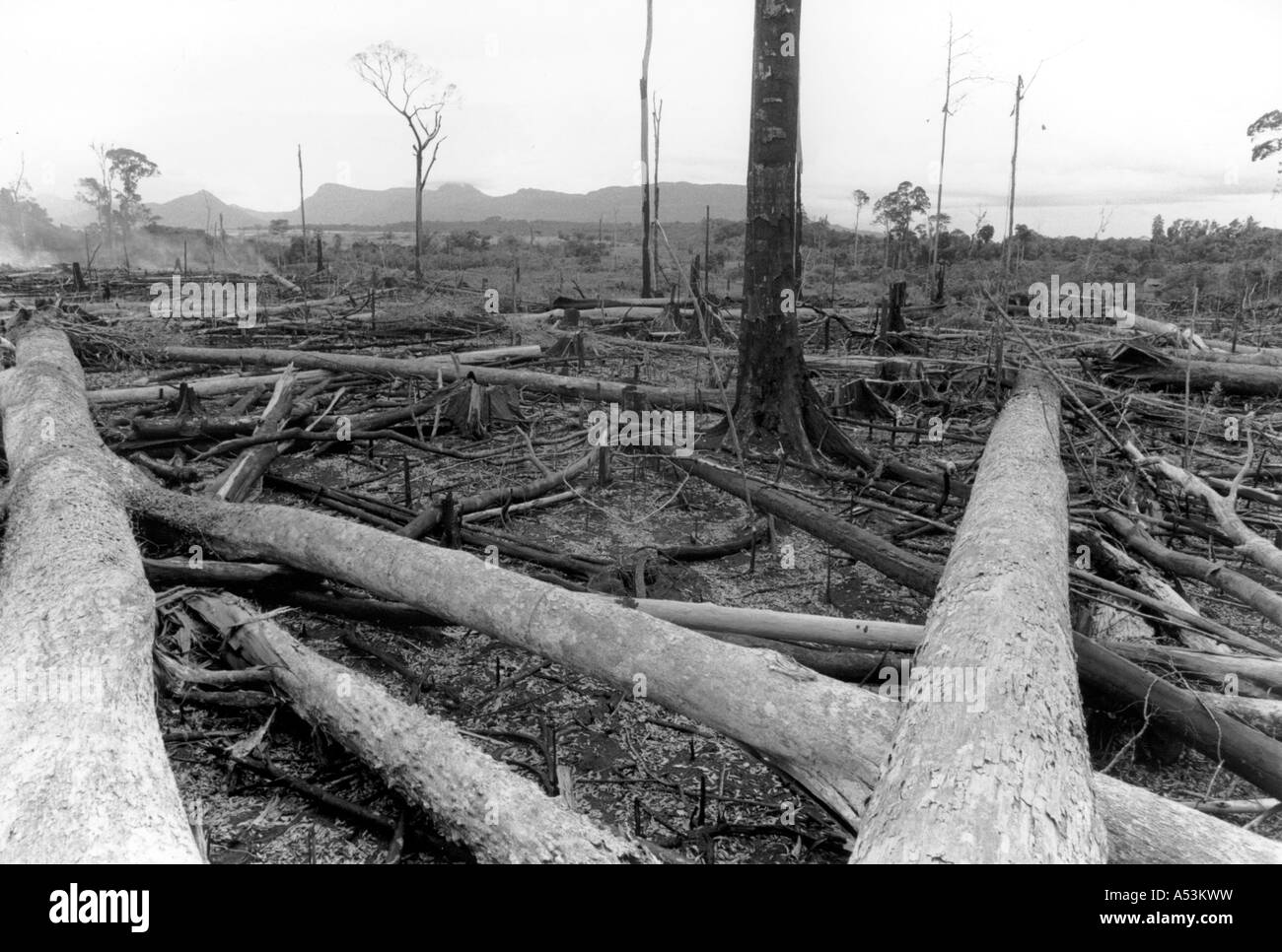 Painet ha1576 317 black and white environment clear cut rain forest west kalimantan indonesia country developing - Stock Image