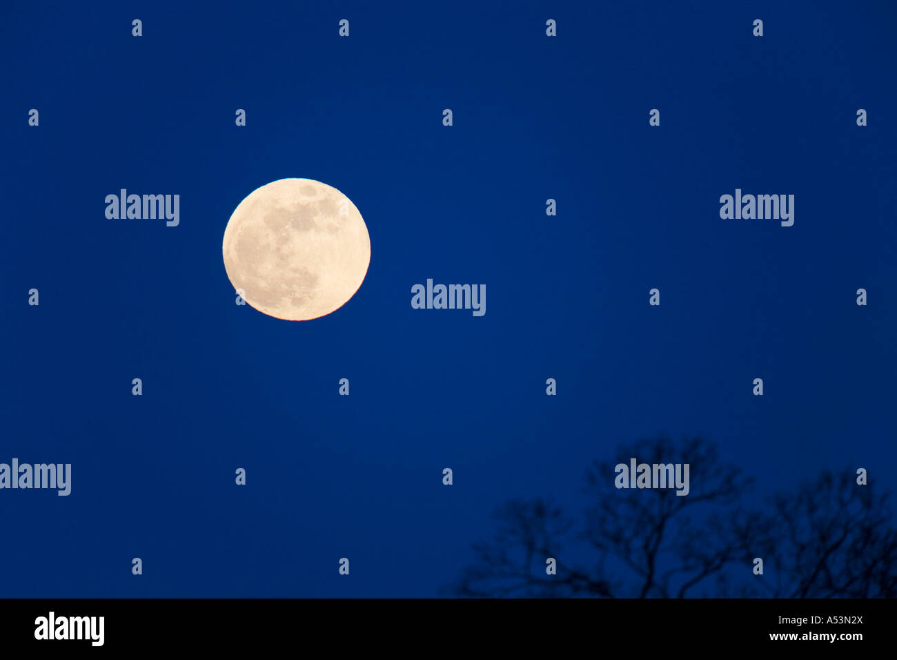 Full moon in night sky over tree tops England UK United Kingdom GB Great Britain British Isles - Stock Image