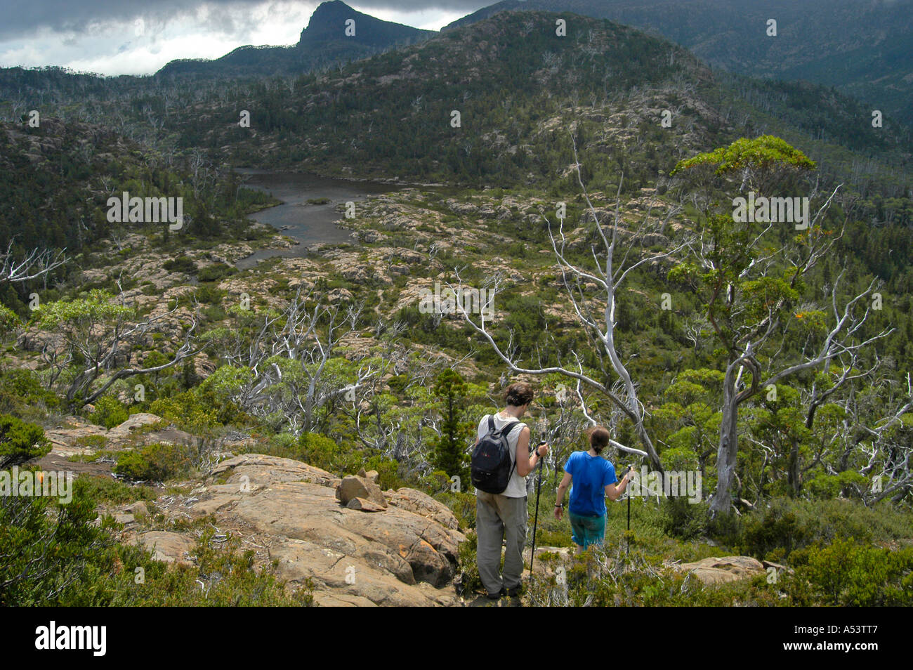 Hikers in The Labyrinth near Pine Valley on Overland Track ...