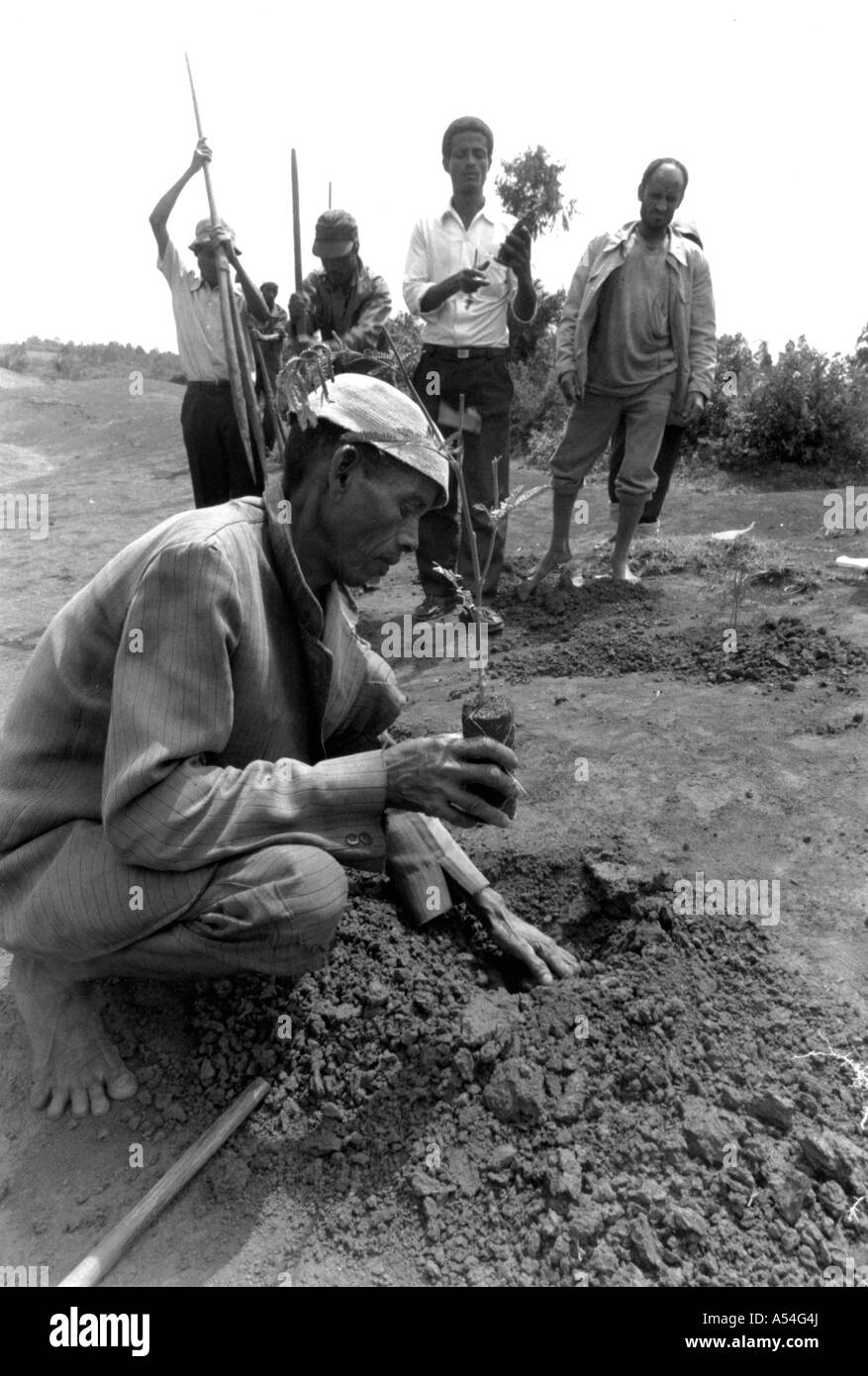 Painet hq1417 black and white environment planting trees deforested area western shoa ethiopia ecology images reforestation - Stock Image