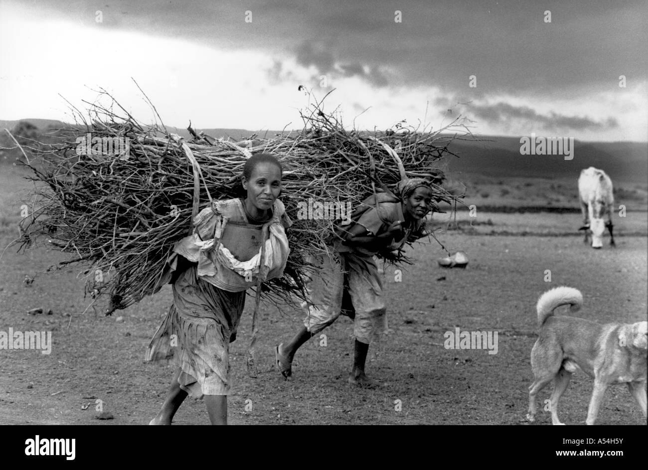 Painet hq1494 black and white labor women carrying firewood eritrea images bw country developing nation less economically - Stock Image