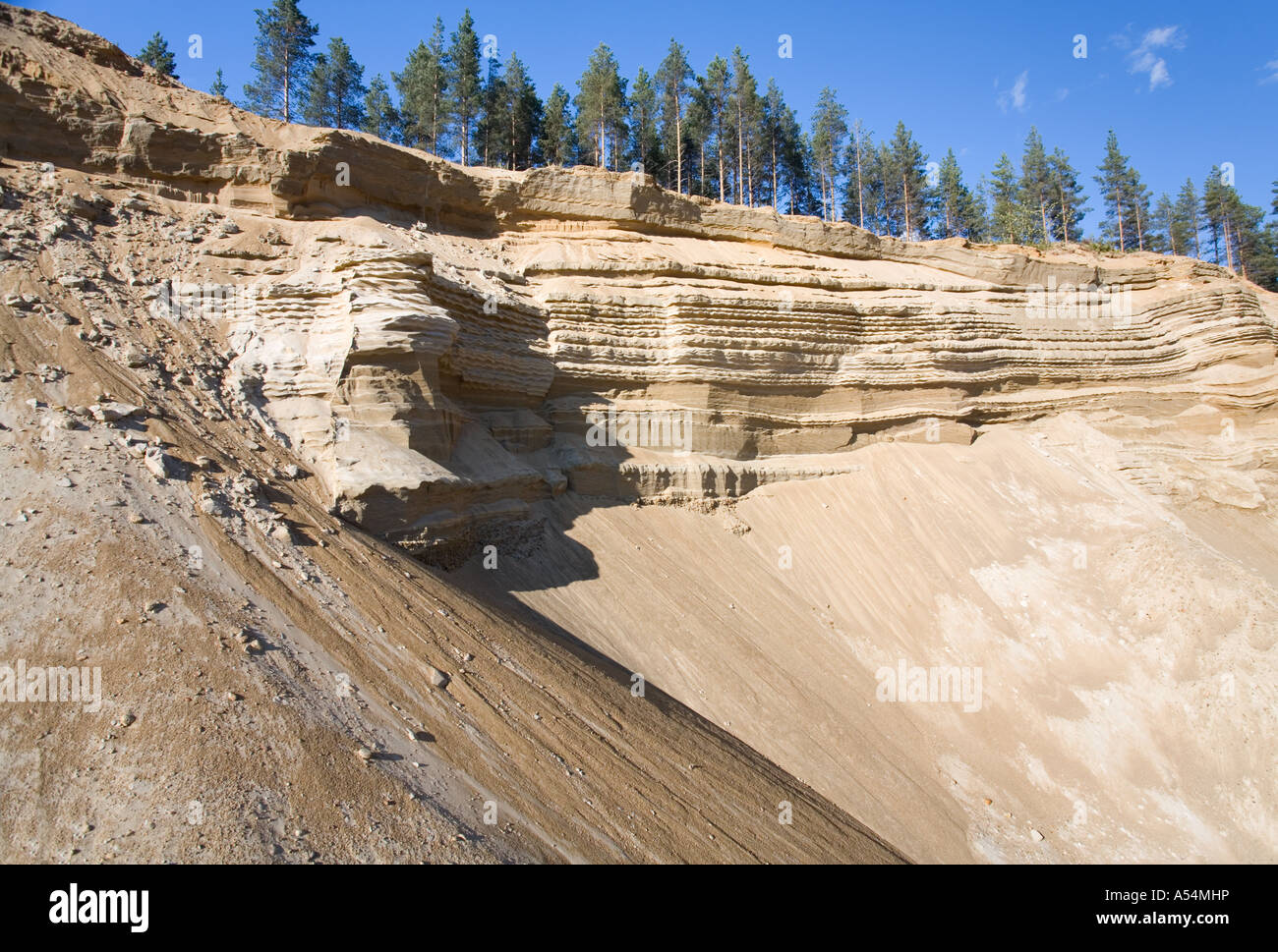 Sandpit wall on a sandy ridge , glacial esker , Finland - Stock Image