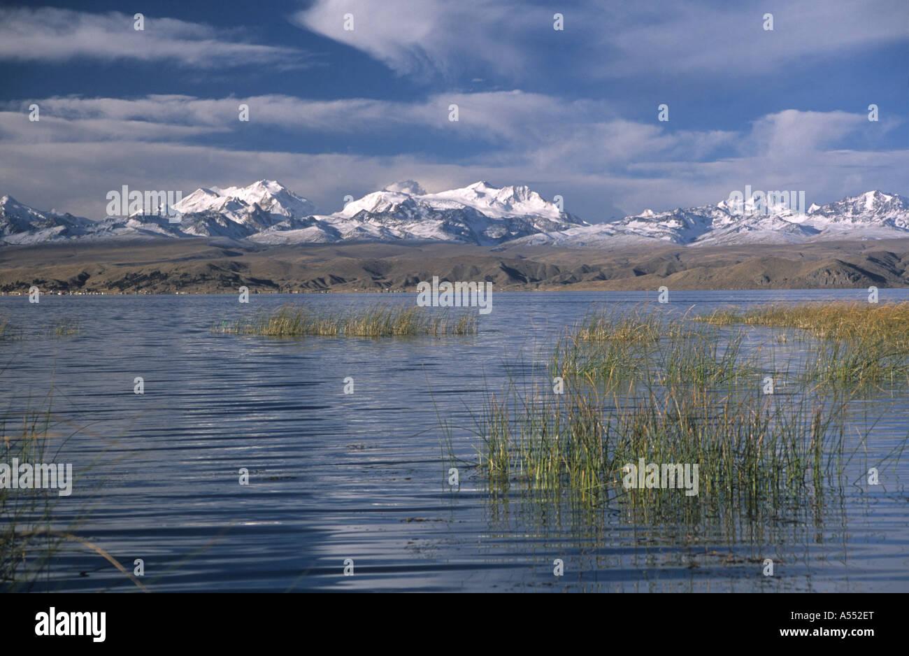 Totora reeds (Schoenoplectus californicus ssp. tatora) and Cordillera Real, Lake Titicaca, Bolivia - Stock Image