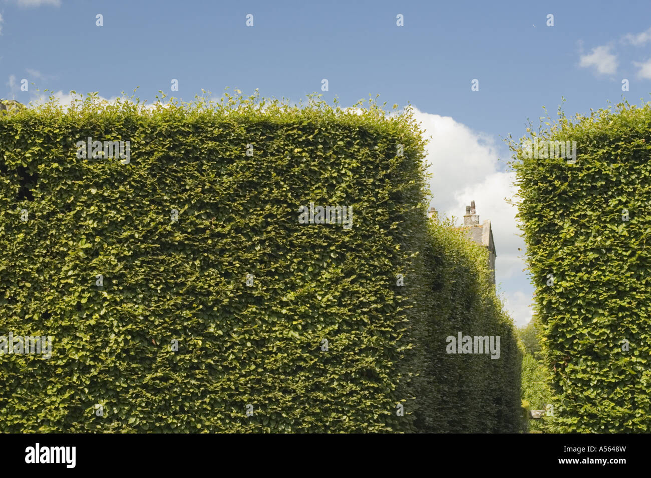Tall Hedge at Levens Hall Topiary Garden Lake District UK England ...