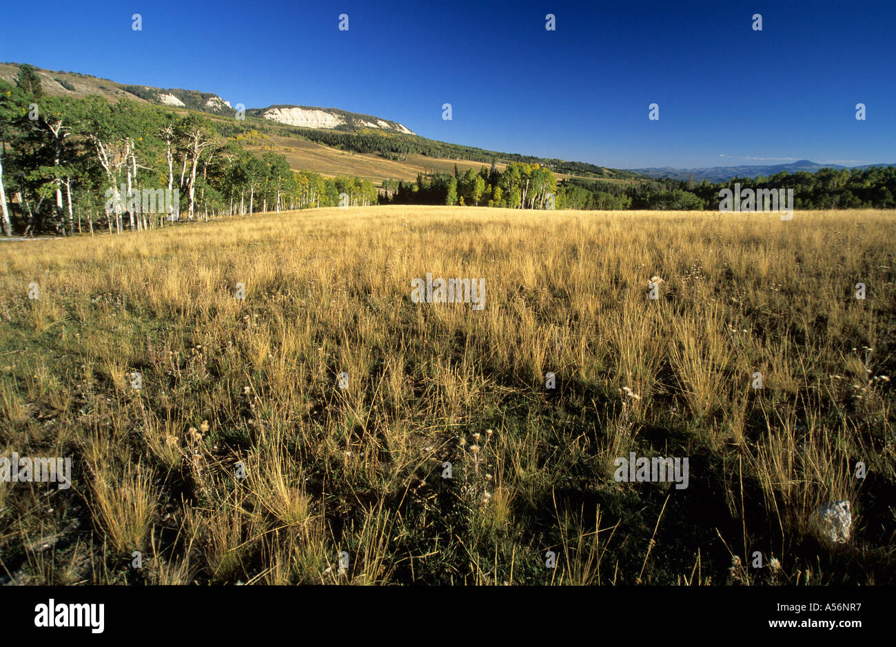High country on the Wasatch Plateau - Stock Image