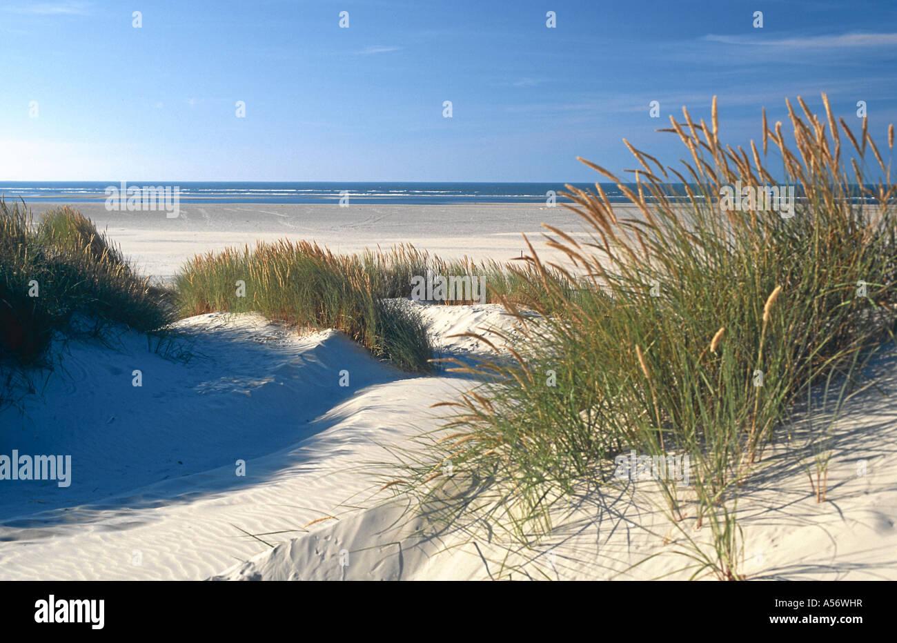Duenen Strand Baltrum Ostfriesland Nordsee Niedersachsen Deutschland North Sea Germany - Stock Image