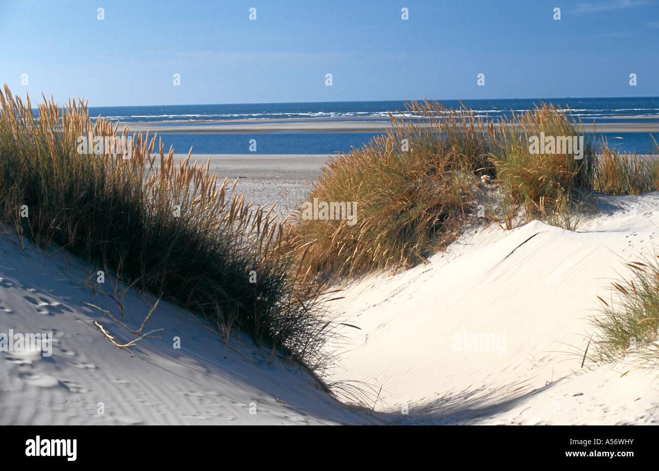 Duenen Insel Baltrum Ostfriesland Nordsee Niedersachsen Deutschland North Sea Germany - Stock Image