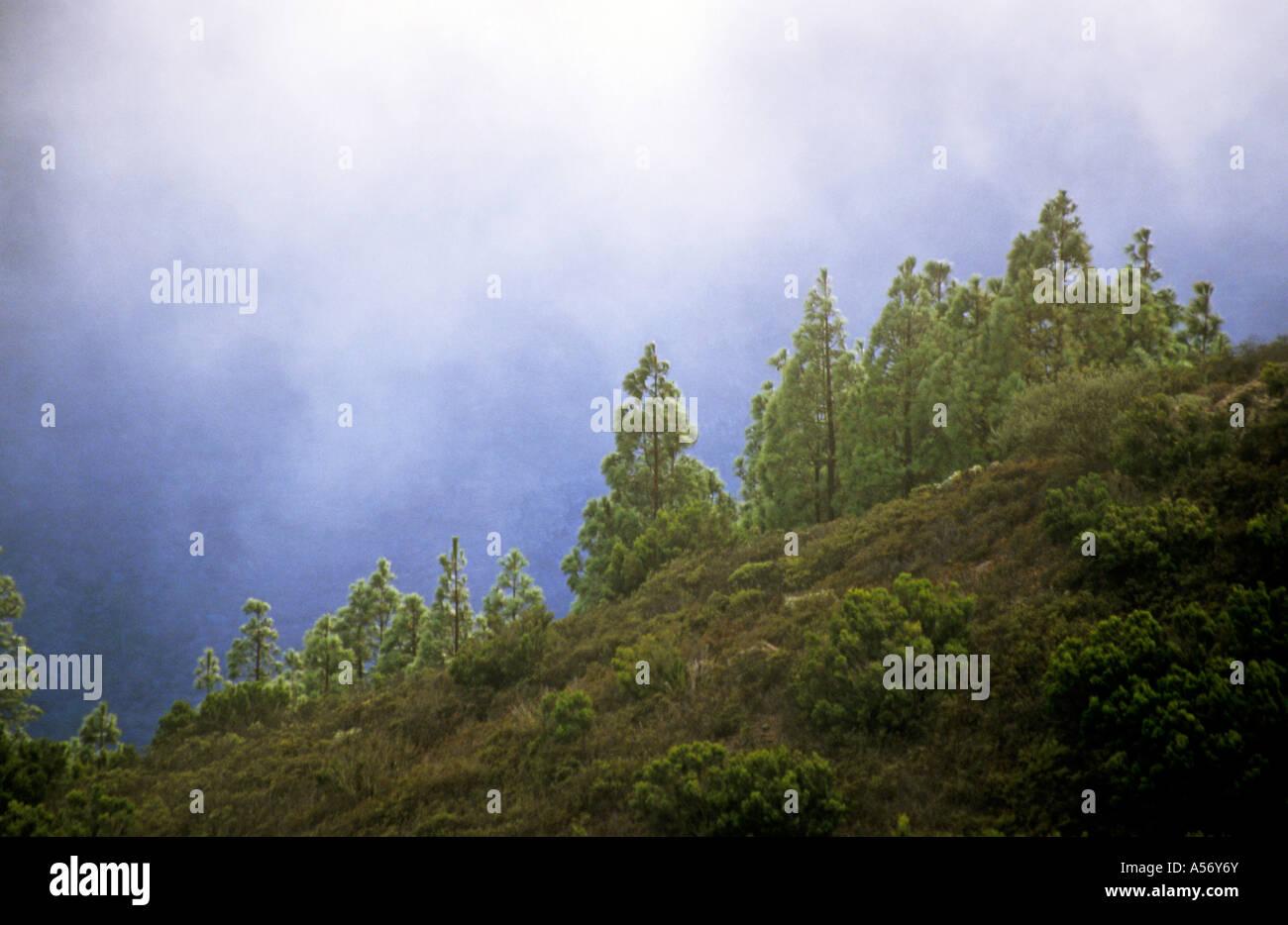 Spain, la Gomera, wood in mist - Stock Image