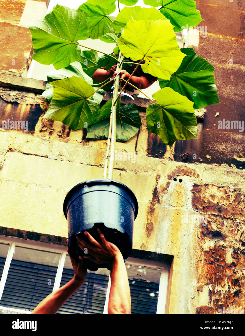 Couple passing a plant out of a window - Stock Image