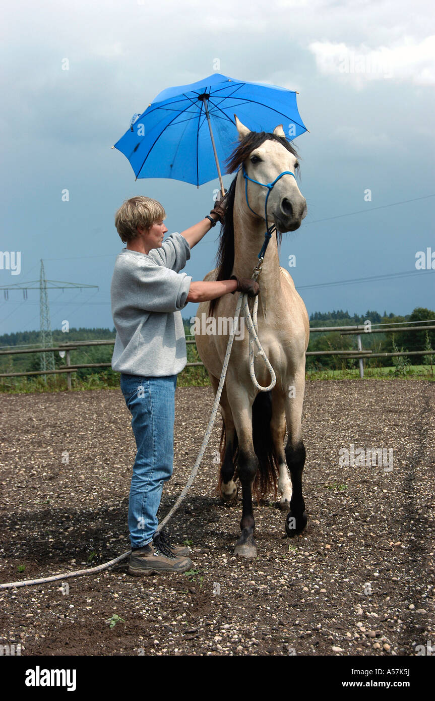 Mangalarga Marchador Horse - Stock Image